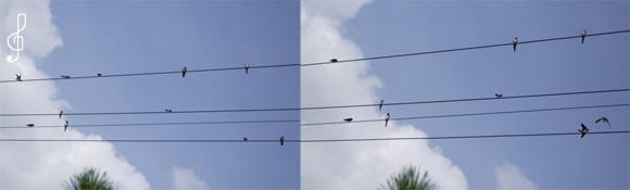 swallows_1.jpg