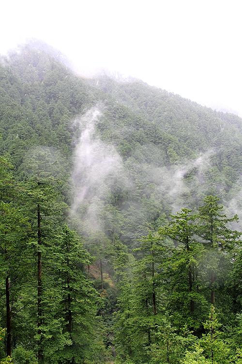 木曾檜の森を育む霧