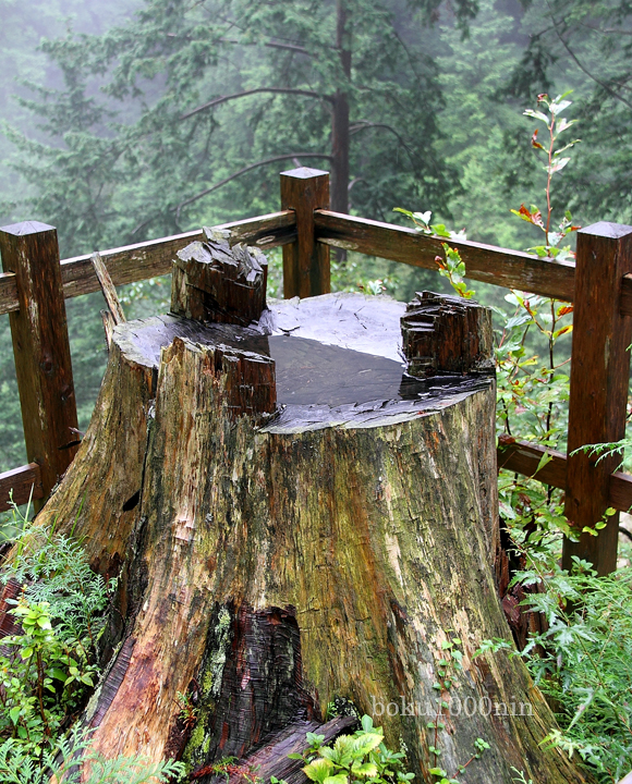第62回式年遷宮の御用材伐採跡
