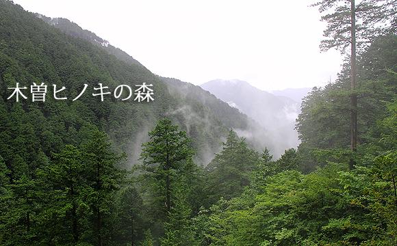 裏木曽・中津川の神宮美林